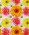 Verpakkings materiaal bloem print 14