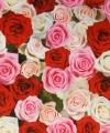 Verpakkings materiaal bloem print 15
